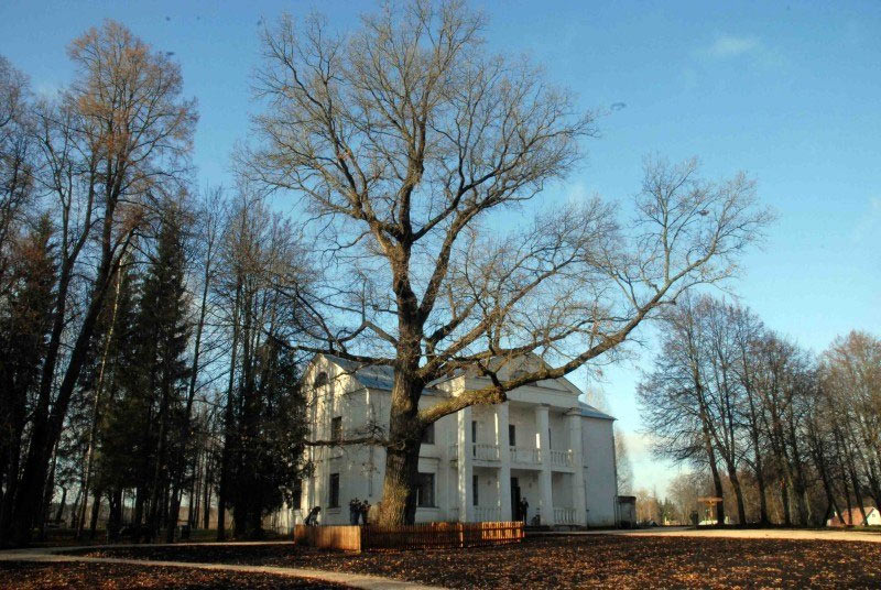 Могучий красавец-дуб из музея-заповедника Абрамцево стал победителем конкурса