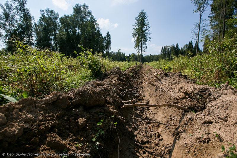 Этой осенью акция Наш лес пройдет в Абрамцеве