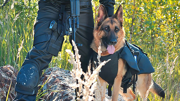 Служебных собак оденут в бронежилеты, сделанные в Хотькове на предприятии Армоком