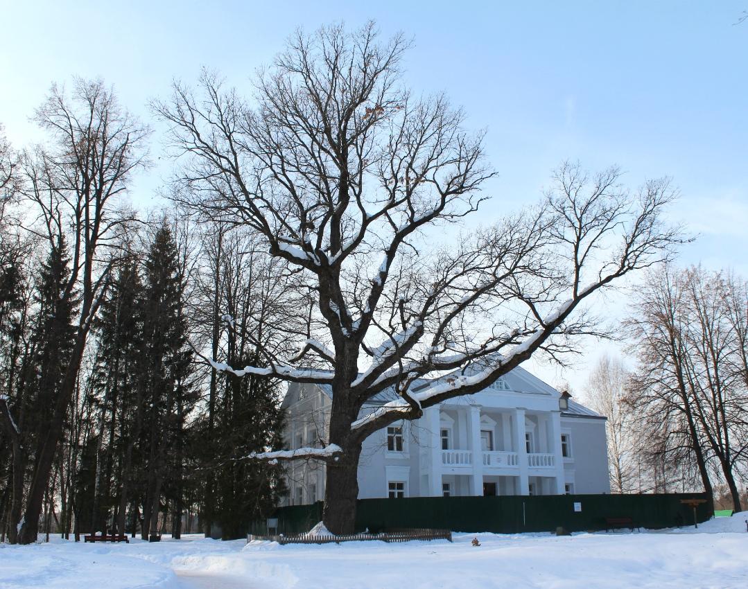 Абрамцевский дуб в конкурсе Европейское дерево года