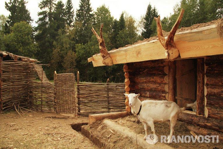 Глаша – хуторообразующая коза